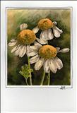 Card-Design-Daisies