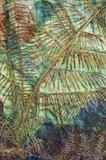 New-Zealand-fern-layers-of-foliage