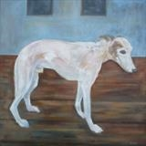 Elderly-Gentleman-Whippet