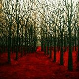Spiky-Trees-in-Red-Field