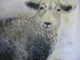 Dartmoor-sheep