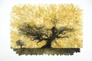 Janet French - Portraits of British Trees - Buckmaster-French